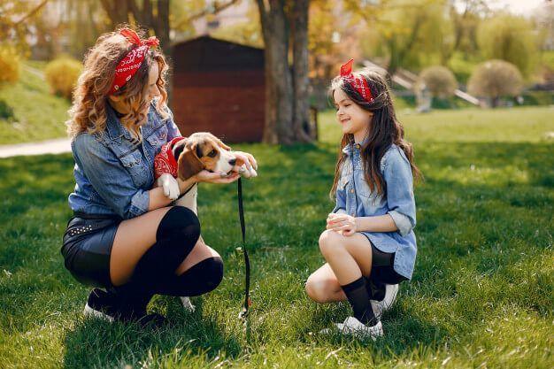 Como educar um cachorro filhote